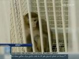 Иран: Новый президент - новая обезьяна в космосе.